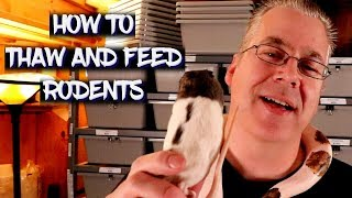 Download How to thaw and feed frozen rodents Video