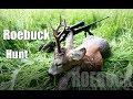 Download 7mm Rem Mag vs buck/ Roebuck hunting 2017/ Bockjagd 2017 Video