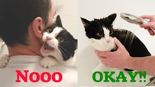 Download MEOW ! As I mewed before and during the bathing Video