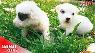 Download Newborn Puppies in the Wood Have Been Saved Video