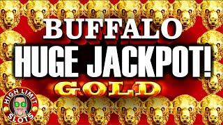 Download Buffalo Gold High Limit Jackpot Hard Rock Casino LAS VEGAS Video