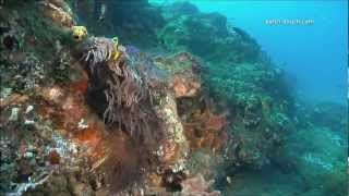 Download Coral Reefs & Climate Change Video