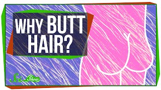 Download Why Do We Have Butt Hair? Video