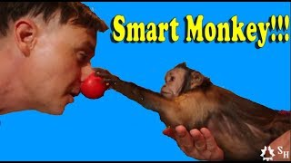 Download Monkey Tricks The Magician Video