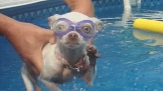 Download Dogs Love Swimming: Compilation Video