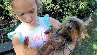 Download We Found a Lost Dog! Video