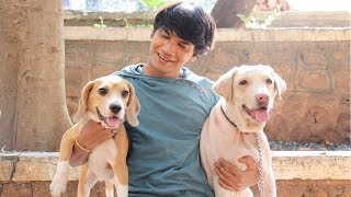 Download DOG SHORT FILM | SMALL POCKET | BEAGLE || MOHAK MEET Video