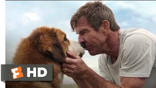 Download A Dog's Purpose (2017) - Bailey Comes Home Scene (10/10) | Movieclips Video