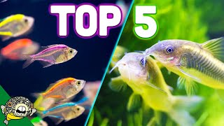Download Top 5 Aquarium Schooling Fish - Best Beginner Schooling Fish Video