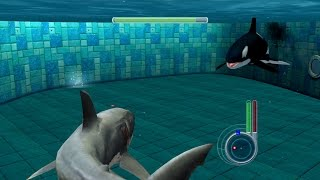 Download Jaws Unleashed - Great White Shark vs Killer Whale Video