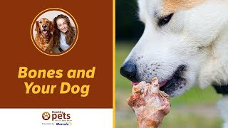 Download Dr. Becker: Bones and Your Dog (Part 1) Video