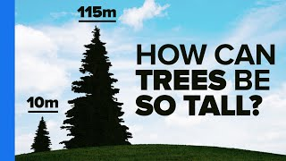 Download The Most Amazing Thing About Trees Video