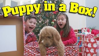Download PUPPY IN A BOX! Christmas Haul & Surprise Unboxing ft. PuppyTube! Video