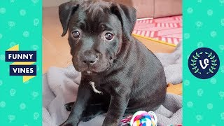 Download TRY NOT TO LAUGH - Ultimate FUNNY & CUTE Animal Videos Compilation | Funny Vines July 2018 Video