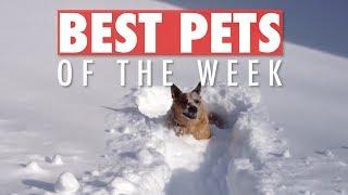 Download Best Pets of the Week | November 2018 Week 2 Video