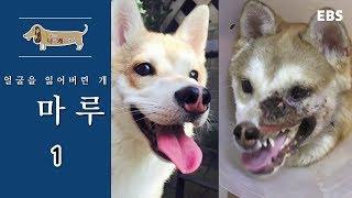 Download 세상에 나쁜 개는 없다 - 얼굴을 잃어버린 개 마루 #001 Video