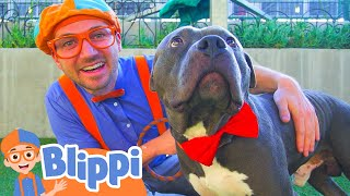 Download Blippi Visits an Animal Shelter | Learn Animals for Children and The Pet Song Video