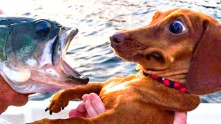 Download 🤣 Funniest 🐶 Dogs and 😻 Cats - Awesome Funny Pet Animals Videos 😇 Video