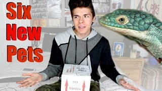 Download Unboxing Abronia Lizards! - I Got 6 New Pets Video