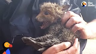 Download Baby Fox Trapped In Pipe Can't Wait To See Mom Again | The Dodo Video