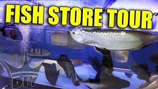 Download MONSTER AQUARIUM - fish store tour Video