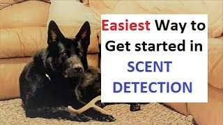 Download How to Train a Dog to Find ANY scent (K9-1) Video