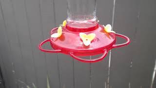 Download Bella Hummingbird Nest Cam 08-10-2018 12:47:45 - 13:47:45 Video