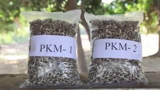 Download Moringa Plantation for Green Fodder Video
