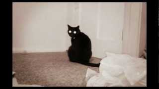 Download Funny cat compilation Video