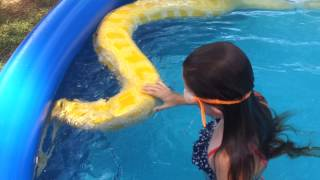Download Girl swims with huge Burmese python Video