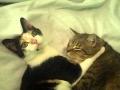 Download Kitten Headbang Video