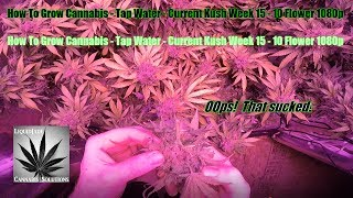 Download How To Grow Cannabis Tap Water Current Kush Week 15 10 Flower 1080p Video