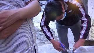 Download Những nghề nuôi dễ kiếm tiền hiện nay Video