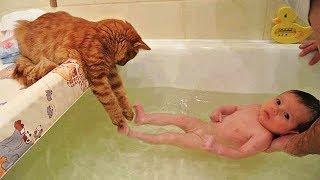 Download 「かわいい猫」 笑わないようにしようとしてください - 最も面白い猫の映画 #287 Video
