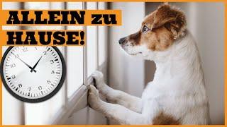 Download Wie lange kann ein Hund alleine bleiben I Trennungsstress bei Hunden erkennen und vermeiden Video