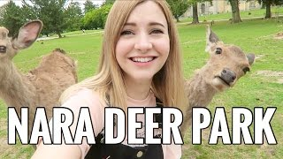 Download Must Visit DEER PARK in Japan! Video