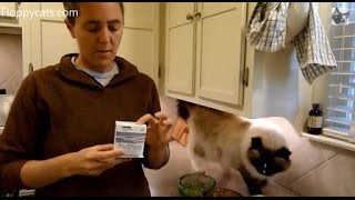 Download Probiotics for Cats - Purina Fortiflora Feline Nutritional Supplement Box - ねこ - ラグドール - Floppycats Video