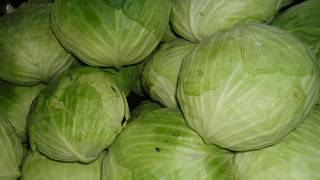 Download පියයුරු මත ගෝවාකොළ තිබ්බොත් වෙනදේ දන්නවද? - Cabbage Leaves for Breast Engorgement and Weaning Video