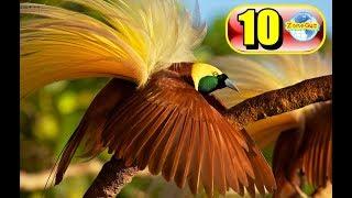 Download 10 สายพันธุ์นกที่สวยที่สุดในโลก บางชนิดอย่างกะหลุดมาจากเทพนิยาย Video