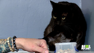 Download How Long Can Jackson Galaxy Stay In The Ring With This Very Angry Kitty? Video