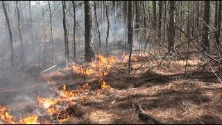 Download Controlled Burns For Wildlife Management - The Management Advantage #68 Video