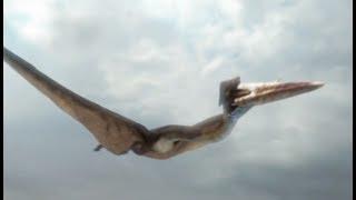 Download Hatzegopteryx : la plus grande créature volante (Planète Dinosaures) - ZAPPING SAUVAGE Video