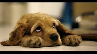 Download 25 Sad Facts About Animals That Might Make You Shed A Tear Video