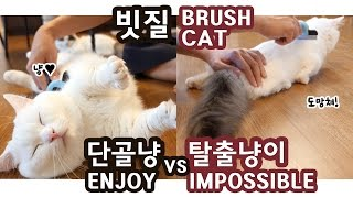 Download 고양이 빗질: 단골냥이 vs 탈출냥이 BRUSH CATS: ENJOY vs IMPOSSIBLE Video