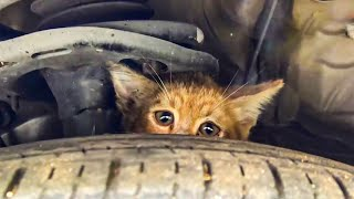 Download 😿 10 most touching and inspiring animal rescues 🐘🐶 Video