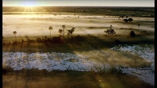 Download 10 Hours Of Relaxing Planet Earth II Grassland Sounds | Earth Unplugged Video