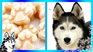 Download How to make HOMEMADE DIY FROSTY PAWS ABC NEWS | Snacks with the Snow Dogs 13 Video