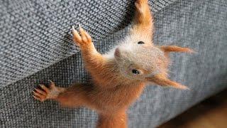 Download Eichhörnchen - Toben, Spielen, Knabbern, Wachsen Video
