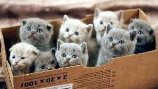 Download Cute Kittens are Very Mischievous Video