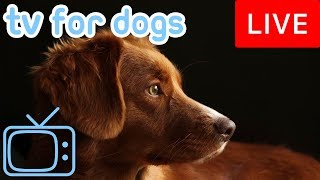 Download TV for Dogs! Chill Your Dog Out with this 24/7 TV and Music Playlist! Video